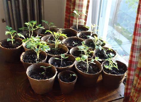 small plants to grow indoors the best veggies to grow indoors veggie gardener