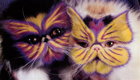 paint like cat see stunningly painted cats of the book why paint cats