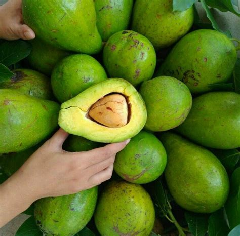 Jual Alat Hidroponik Ambon healthy pleasure indonesia home