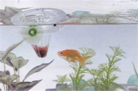 Pakan Alami Ikan Hias Yang Biasa Di Kultur 301 moved permanently