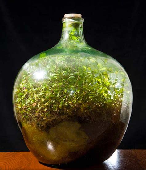 wasser gläser pflanze lebt seit 40 jahren in verschlossener flasche