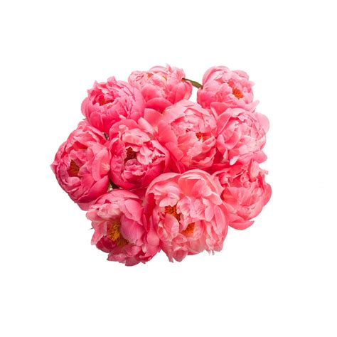 peonies bouquet coral peony bouquet flower muse