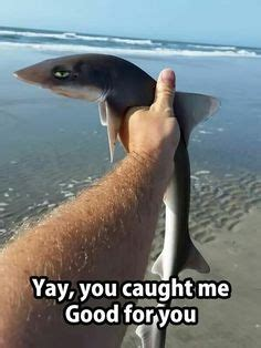 baby shark meme 26 funny pictures that will make you smile pictures so