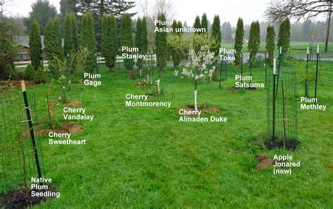 Growing Greener in the Pacific Northwest: Home Orchard