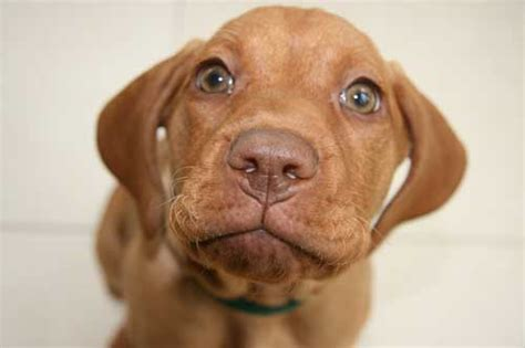 best age to take puppy home finding choosing buying and bringing home a new puppy pup