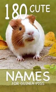cute guinea pig names for a girl cute guinea pig names