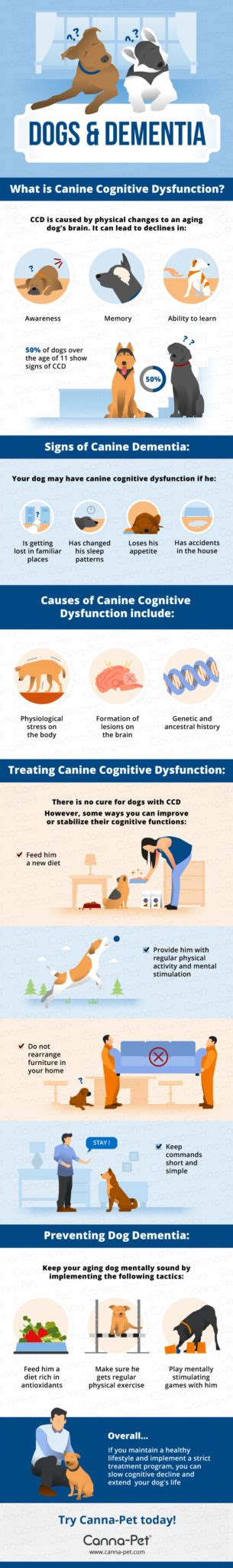 dementia in dogs dementia cognitive dysfunction canna pet