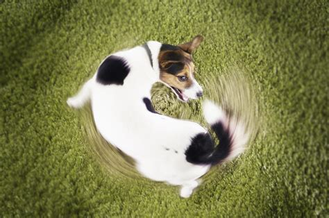ocd in dogs ocd behaviors stilwell positively
