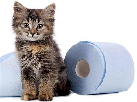 alimentazione per dissenteria diarrea dissenteria gatto