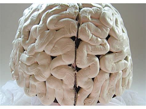 How To Make A Paper Mache Brain - gory brain cap make diy projects how tos electronics