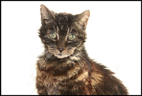 when to euthanize a what is the ultimate test for deciding when to euthanize your cat