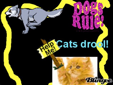 dogs and cats rule dogs rule cats drool picture 129970149 blingee