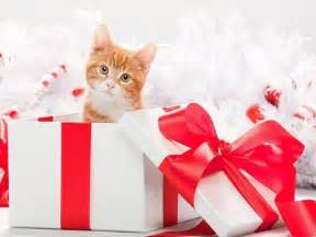 10 christmas gift ideas for your cat meowtee the cat blog