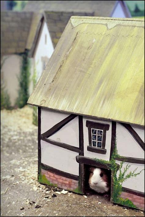 Guinea Pig House by Guinea Pig House Guinea Pig Habitat