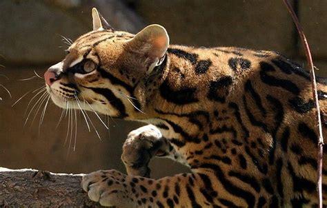 Animal World 7 Tshirtkaosraglananak Oceanseven gata lili novo cras beneficiar 225 cerca de 7 mil animais
