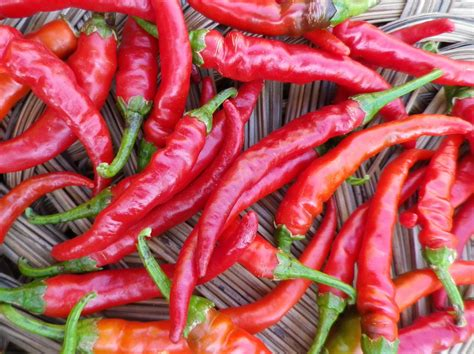 red hot peppers cayenne long red hot pepper bulk size 3 g southern