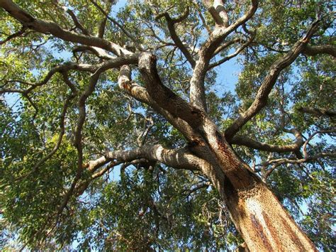 tree pic trees somewhere else