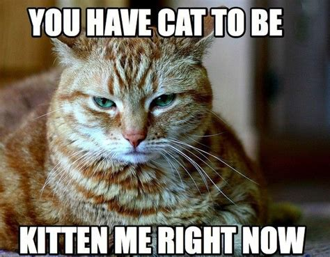 Bad Kitty Meme - 21 animal jokes that will either make you roll your eyes