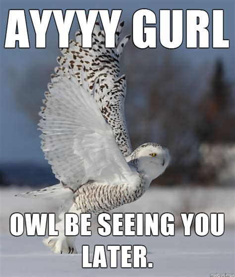 Superb Owl Meme - majestic funny quotes quotesgram