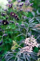 gap  specialising  garden  plant photography