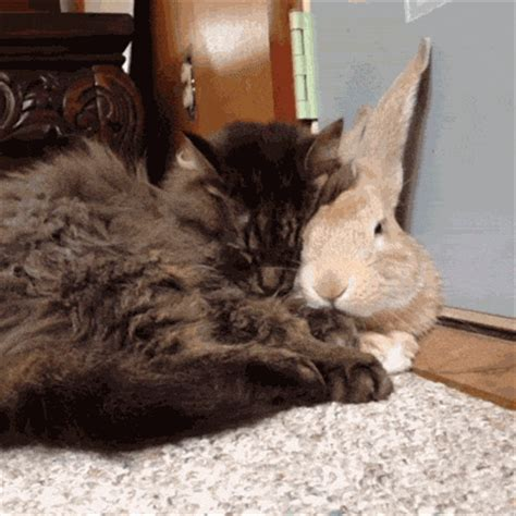 affectionate bunny kitty pictures   images  facebook tumblr pinterest  twitter