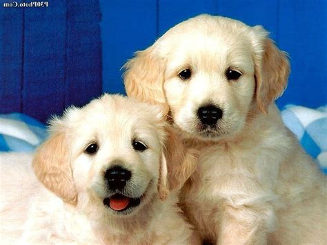 beautiful puppies html email link subject phpsourcecode net