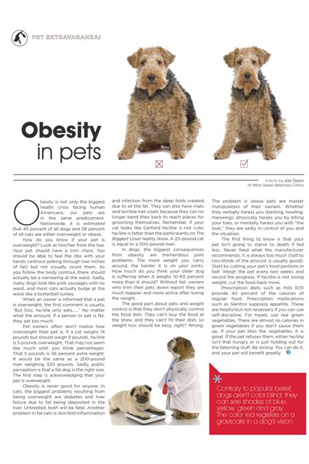 the human psyche and the pet obesity epidemic hilton head magazines ch2 cb2 pet extravaganza obesity