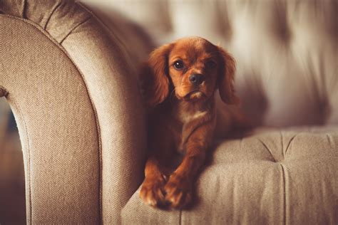 how to remove dog hair from sofa how to remove dog and cat hair from clothes upholstery