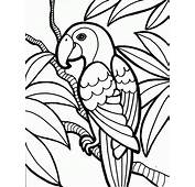 Parrot Bird Coloring Pages Peacock