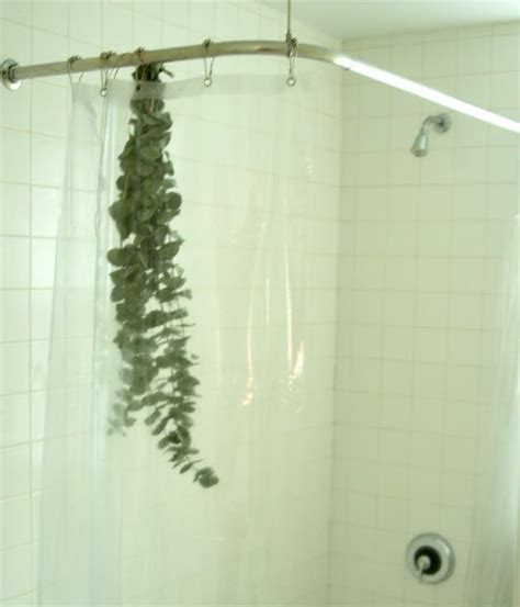 look eucalyptus in the bathroom