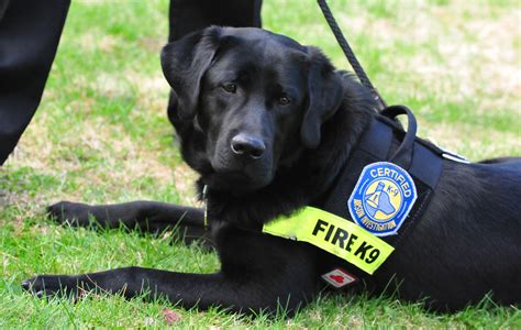 state dogs expert stilwell embeds in the state farm 174 arson