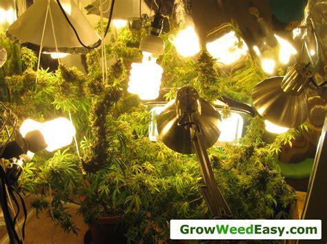 cannabis grow light upgrade guide yields potency