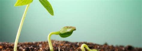 Hormon Zpt Alami cara membuat zat pengatur tumbuh zpt nabati indo