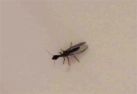 Bathroom Bugs Identification by Bathroom Bugs Identification Images