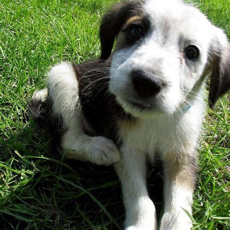 sognare fiori bianchi sognare cani affetto e fedelt 224 significato sogno