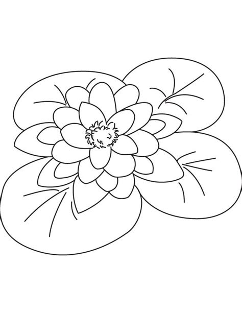 coloring page water lily giant water lily coloring page download free giant water