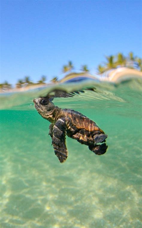 best 25 turtles ideas on garden ideas