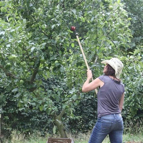 Gardener S Supply Apple Picker 1000 Images About Harvesting Tools Equipment On