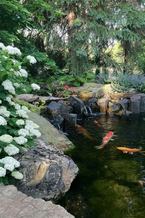 Backyard Ponds For Sale by 10 Best Ideas About Koi Ponds On Ponds Koi