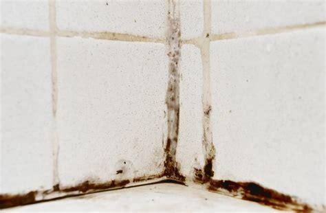 Schwarzer Schimmel An Der Wand 5035 by Schwarzer Schimmel Im Haus Ursachen Entfernen