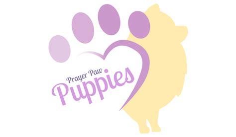 pomeranian puppies spokane white black pomeranian puppies for sale by breeder in spokane mo prayer paw puppies