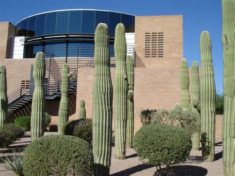 Gilbert Town Search Gilbert Az Gilbert Town And Cacti Photo Picture Image Arizona At City Data