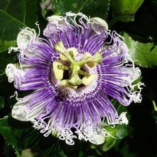 ricerca fiori fiori rari cerca con quot flowers