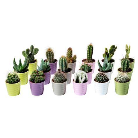 Kaktus Zimmerpflanze by Moderne Zimmerpflanzen Als Frische Deko F 252 Rs Zuhause