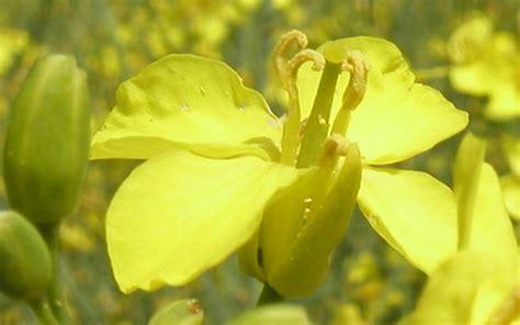 mustard benessere dal mondo