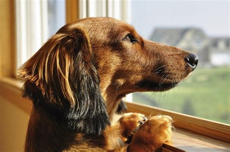 how to treat anxiety in dogs separation anxiety in dogs symptoms and home treatments