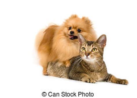 giochi di portare a spasso i cani spasso cani gatti immagini di archivi fotografici3 043