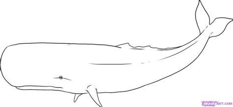 cool sperm whale pictures to color imagebasket net sperm