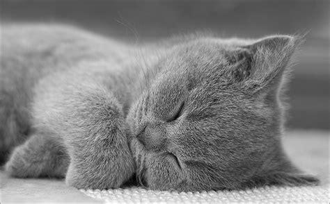 Gute Nacht Katzen Bilder by Gute Nacht Foto Bild Tiere Haustiere Katzen Bilder