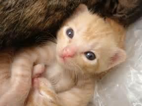 Newborn baby kitten kittentoob
